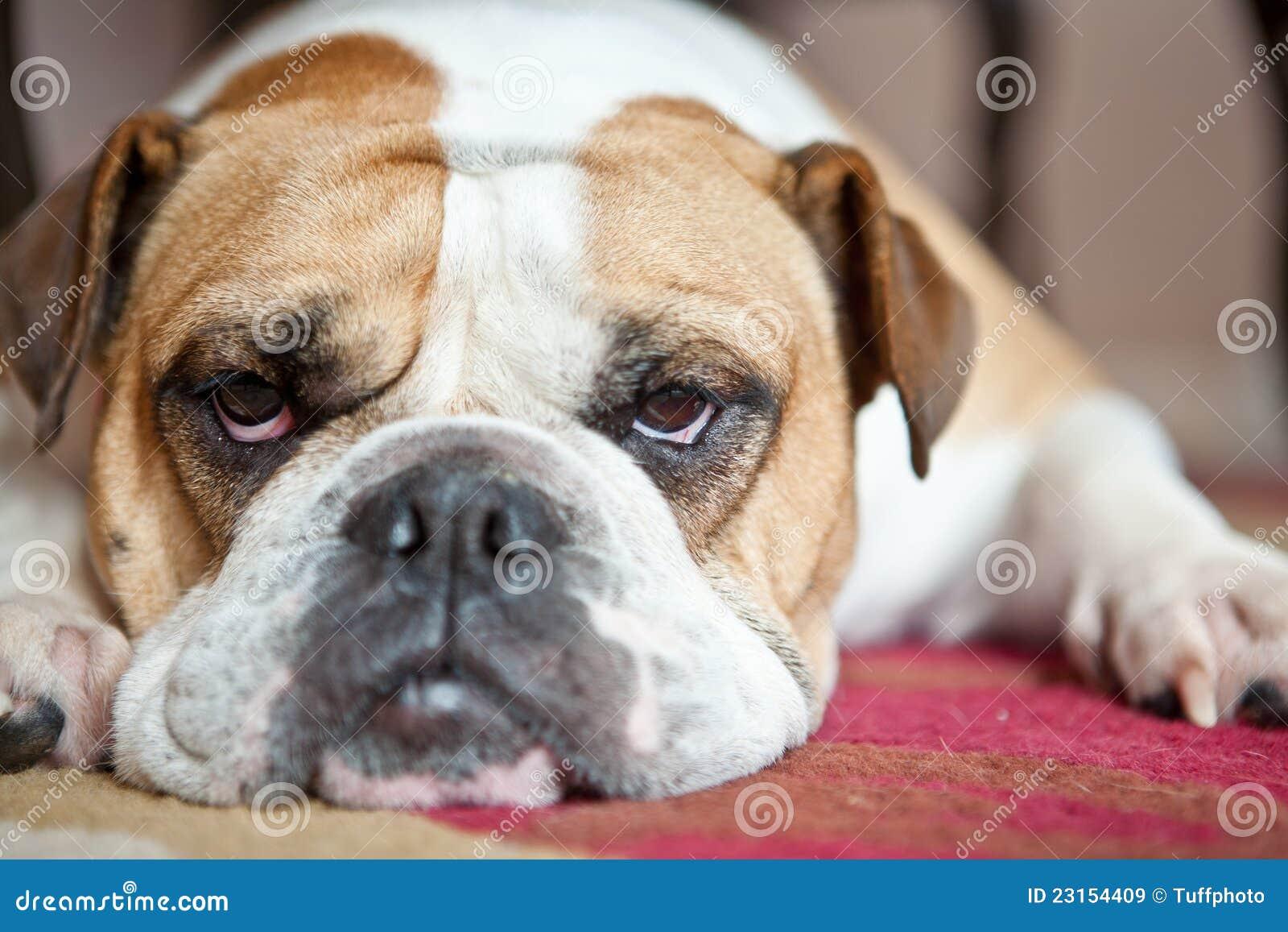 Pin bulldog inglese che fa il bagno on pinterest - Fare il bagno in inglese ...