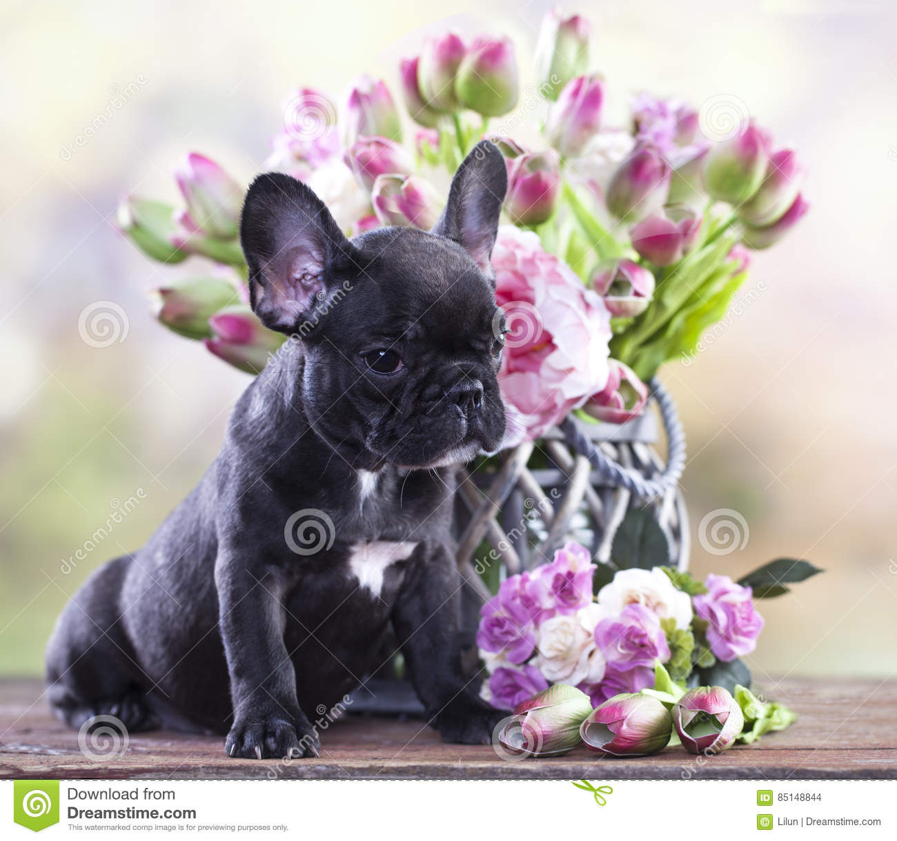 Bulldog Puppy And A Bouquet Of Flowers Stock Photo - Image of ...