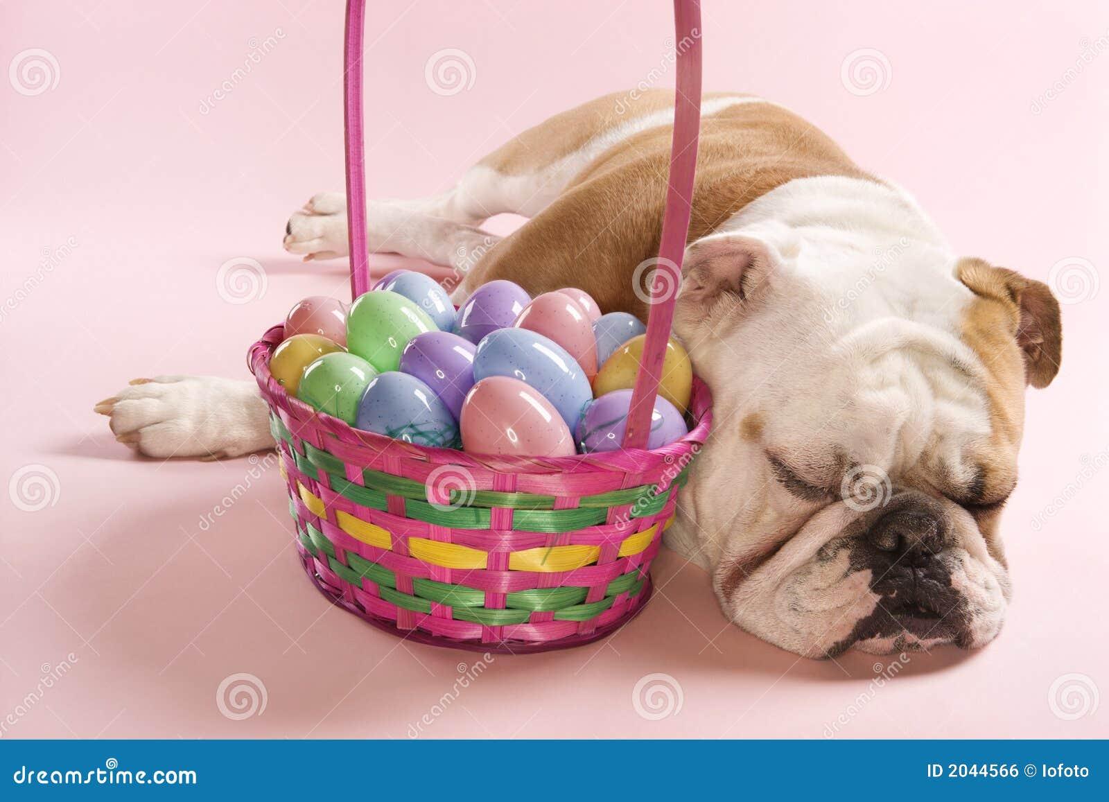 Bulldog Sleeping Beside Basket Stock Photo Image Of Tired