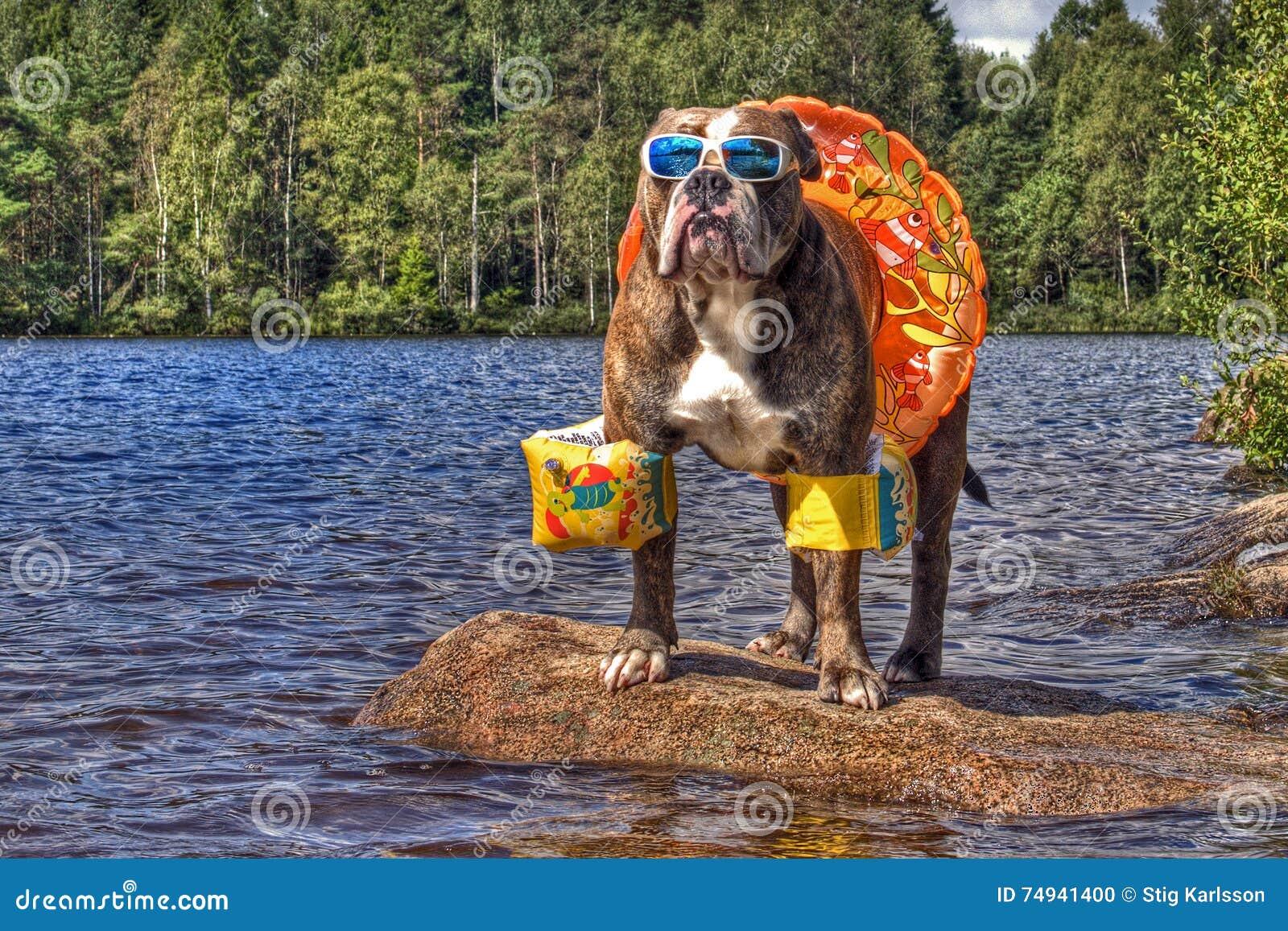 Bulldogg i sjön med floaties på i HDR