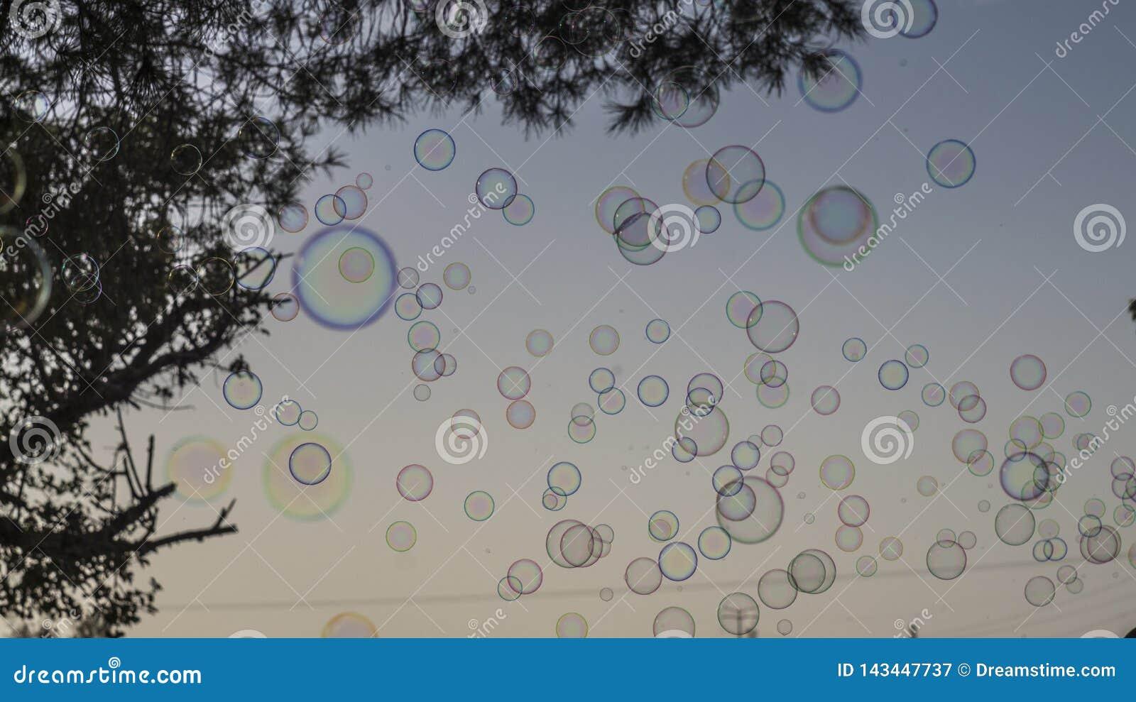 Bulles de savon avec l arbre sur le ciel