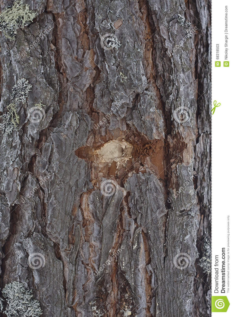 Bullet hole in tree bark wood lumber moss close up brown pine tree