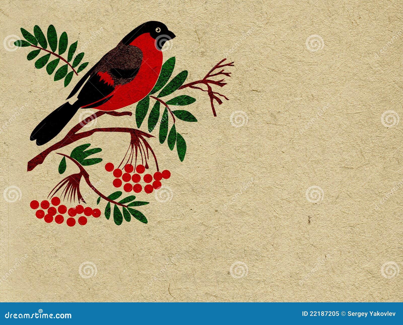Bullfinch κόκκινο