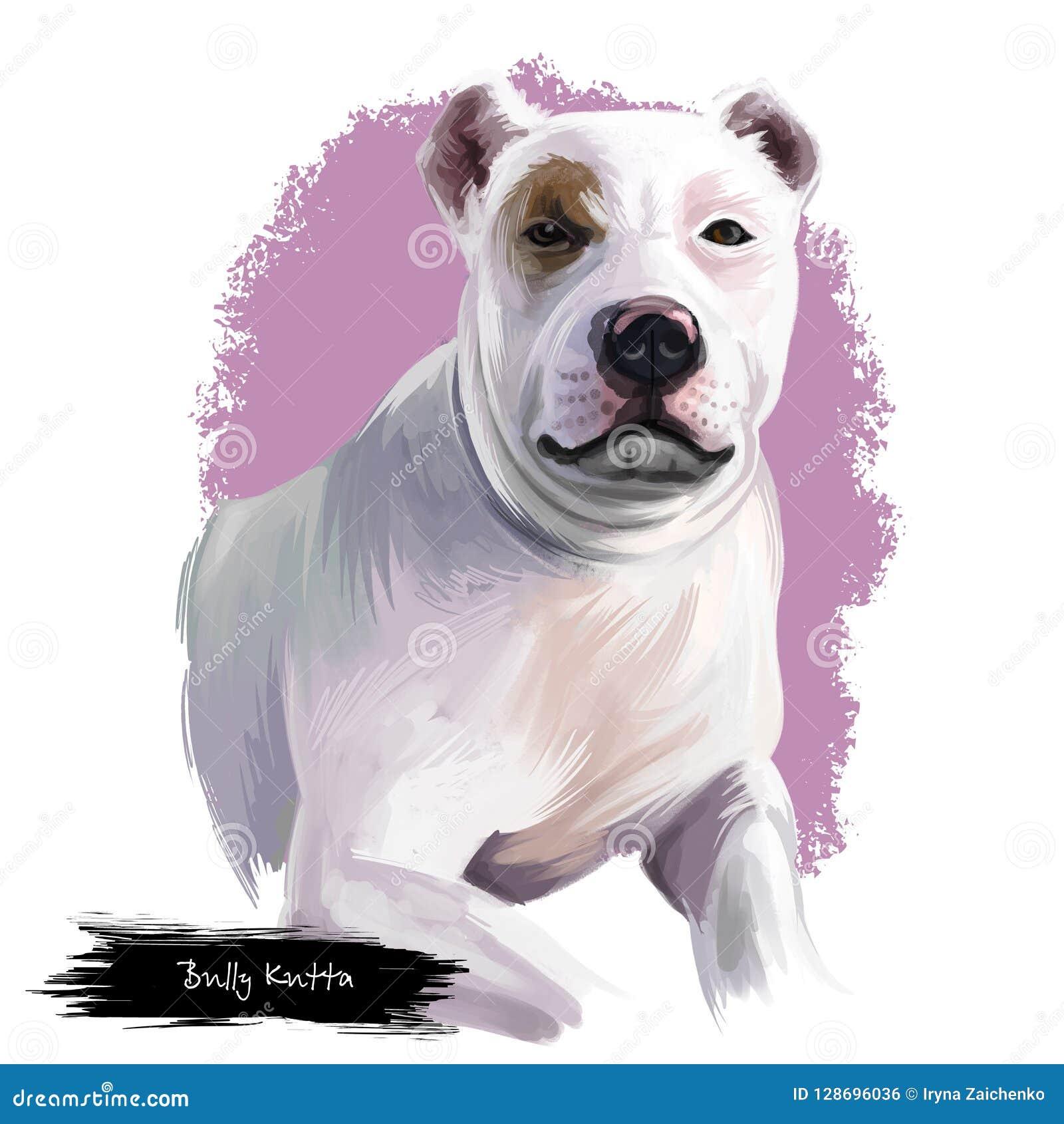Bully Kutta Dog Breed Isolated On White Background Digital Art