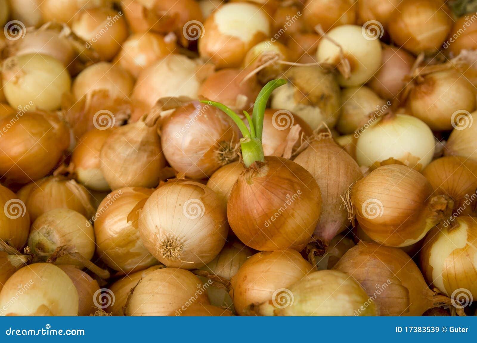 Bulto de la cebolla blanca