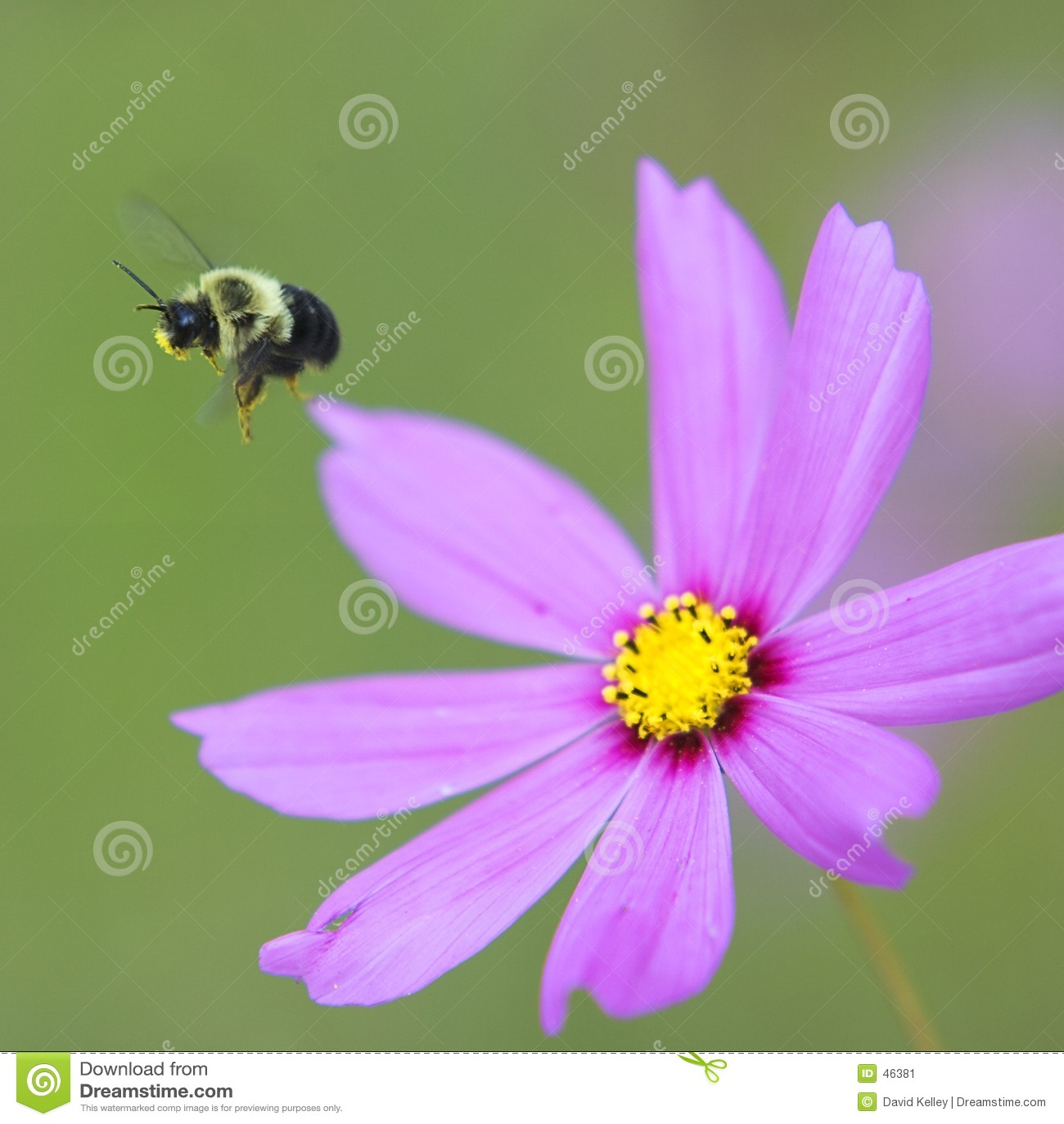 Bumble πτήση μελισσών