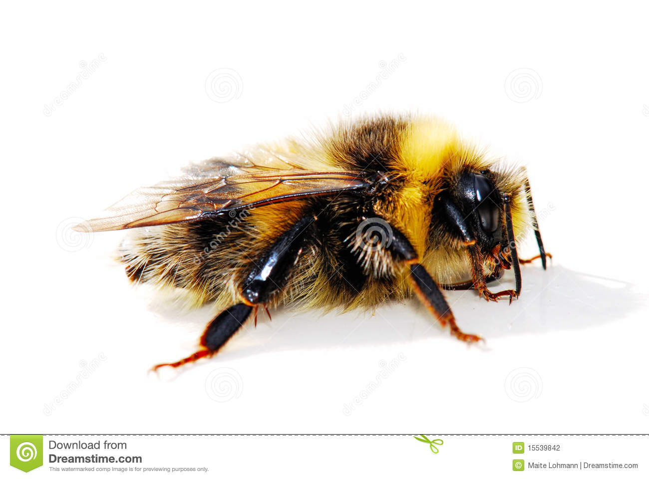 Bumble Bee Stock Photo...