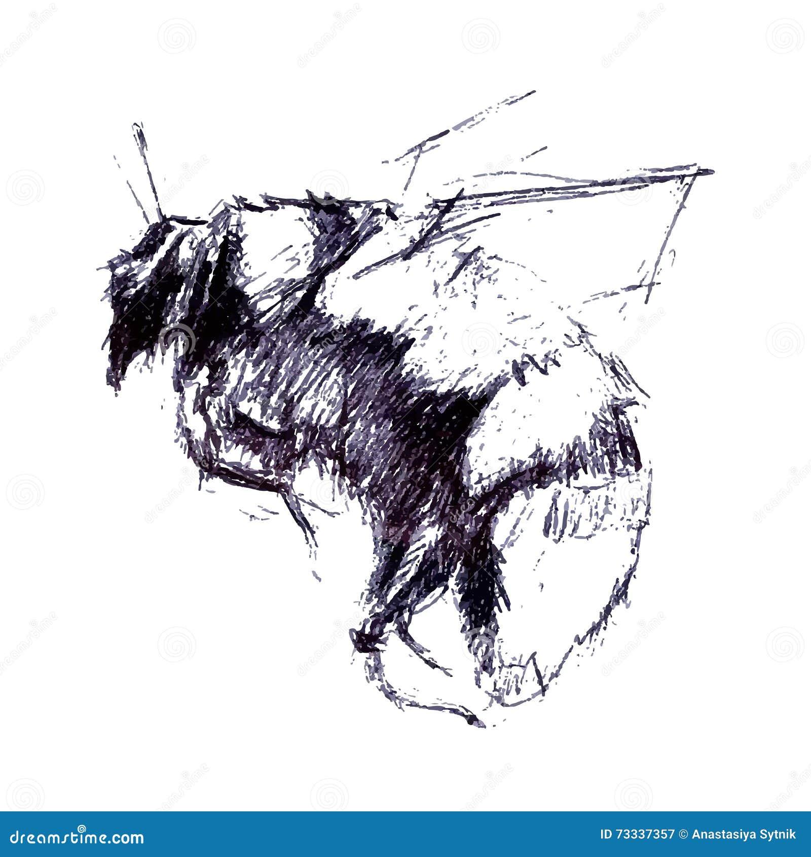 Bumblebee rocznik grawerująca ilustracja Ręka rysunkowy wektor rozszerza