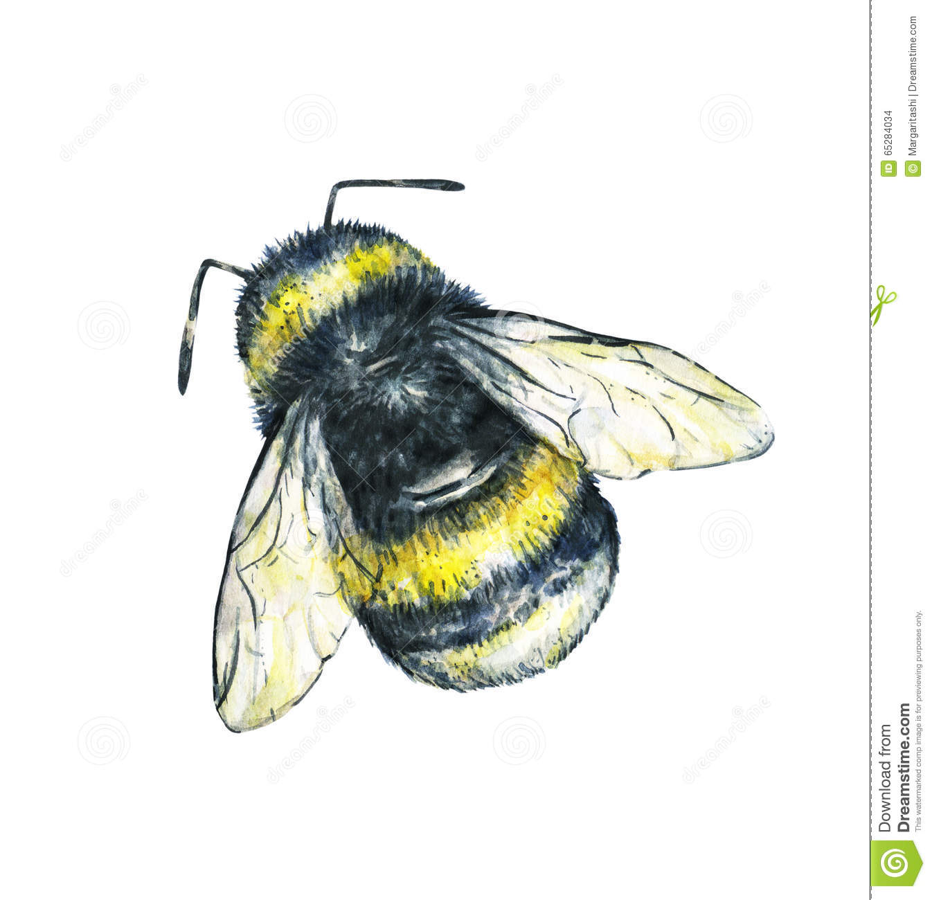 Bumblebee On A White Background Watercolor Drawing Insects Art Handwork Seamless Pattern