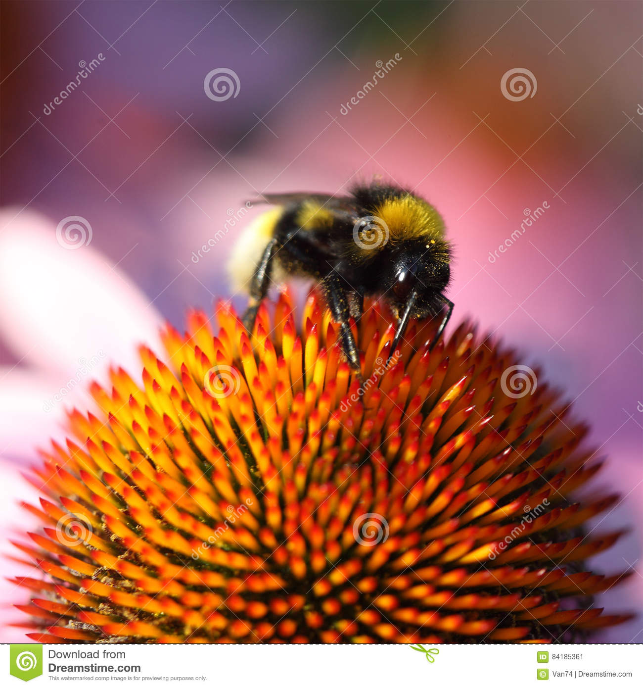 Bumblebee On Yellow Flower Stock Image Image Of Roses 84185361
