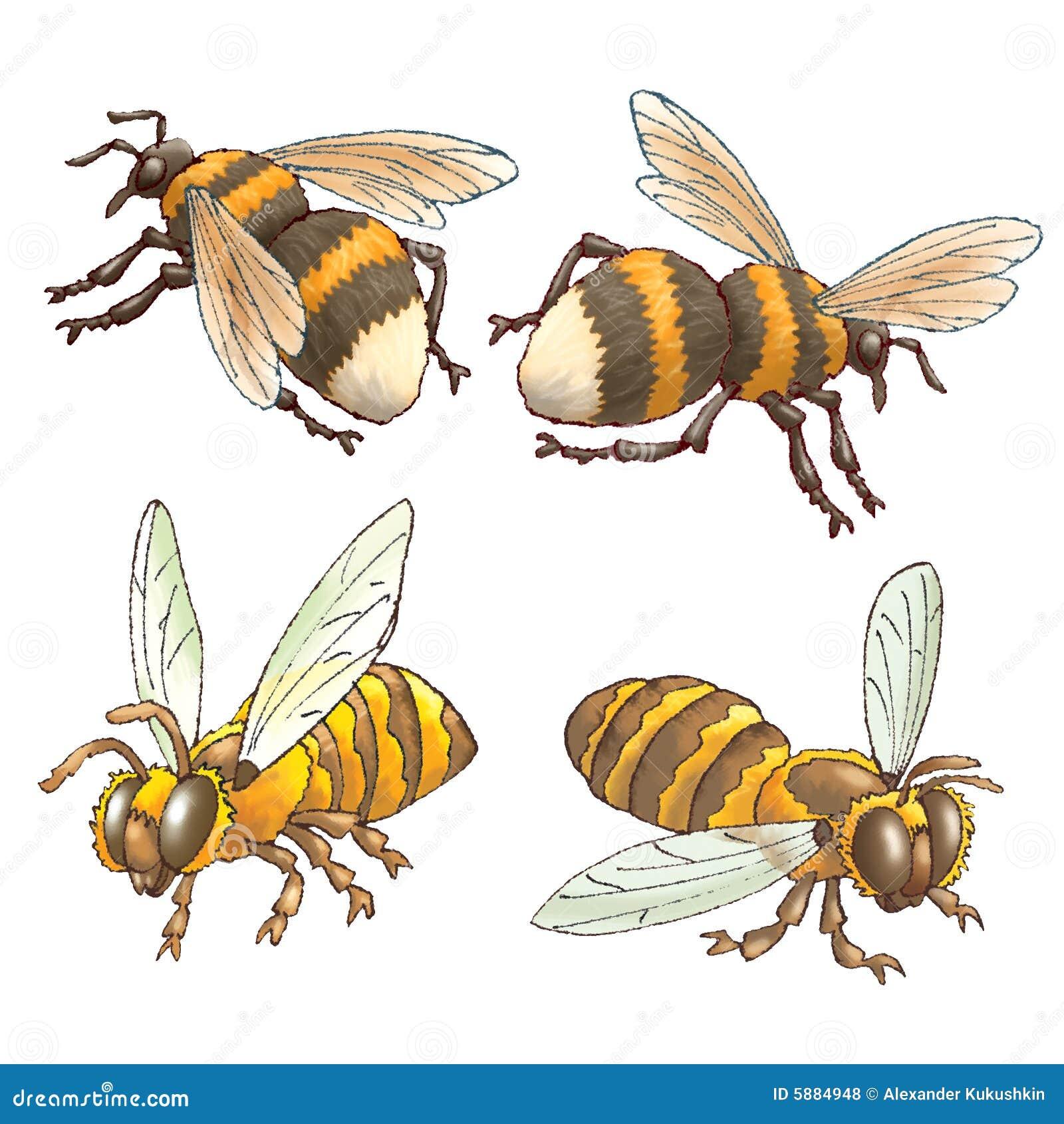 Bumblebees μελισσών