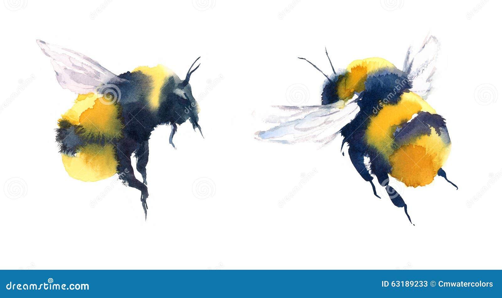 Bumblebees akwareli Ilustracyjna ręka Rysująca