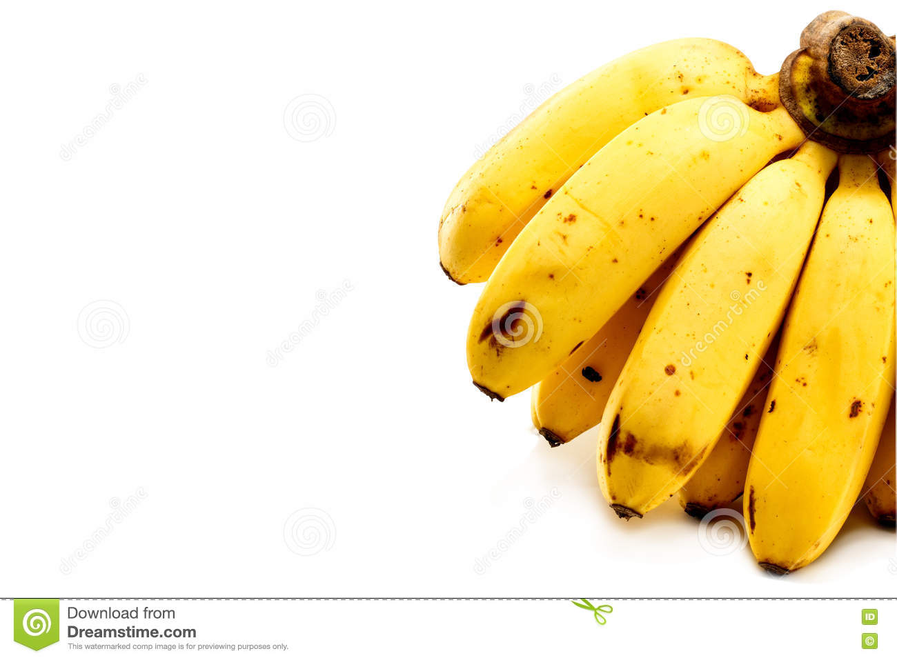 Bunch of bananas isolated on white background with copy space