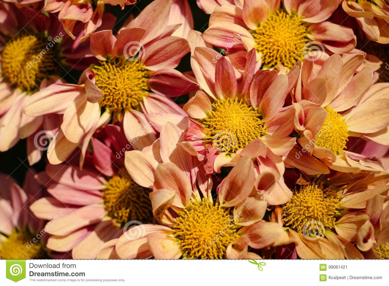 A Bunch Of Beautiful Flowers Stock Image Image Of Screen Garden