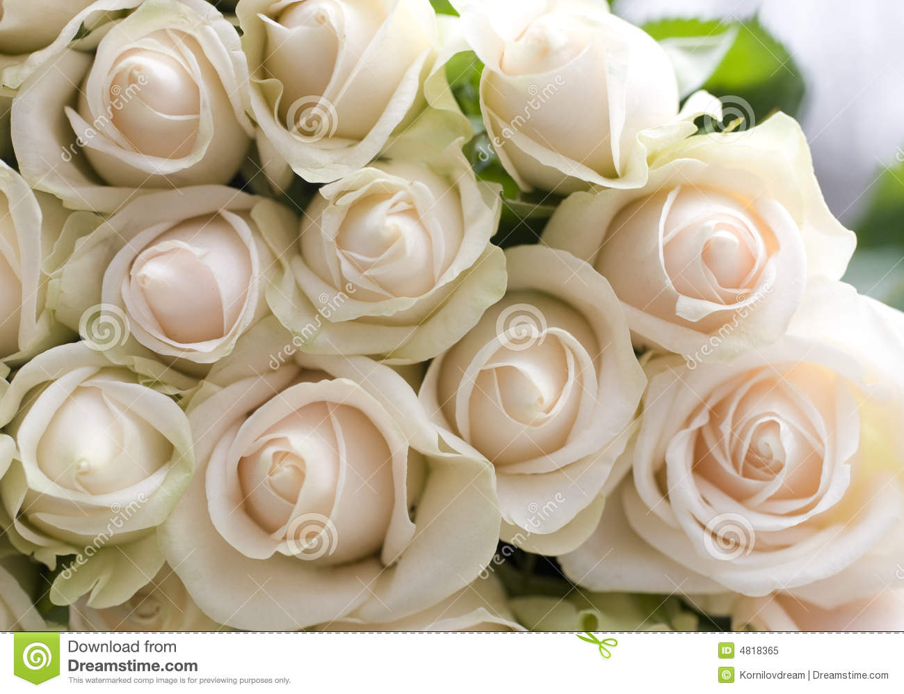 Bunch Of Beautiful Roses Royalty Free Stock Photo Image