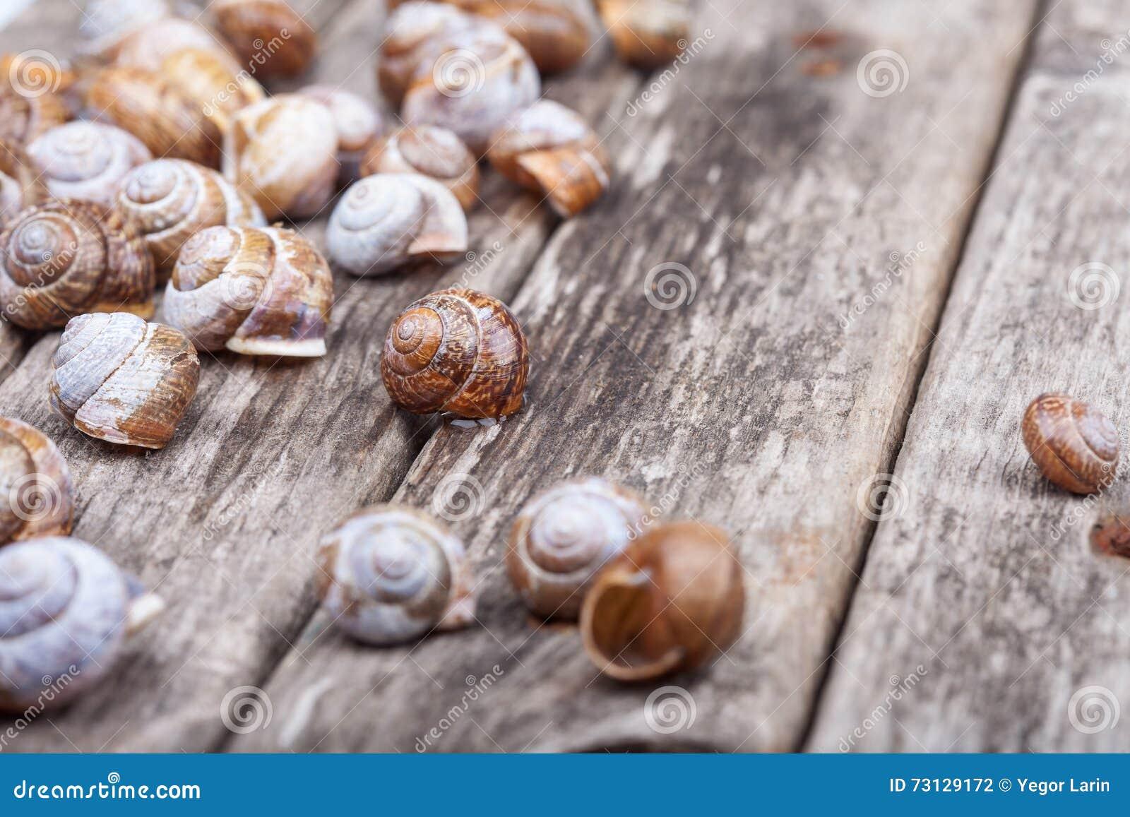 Bunch of brown spiral shells on grunge wooden board