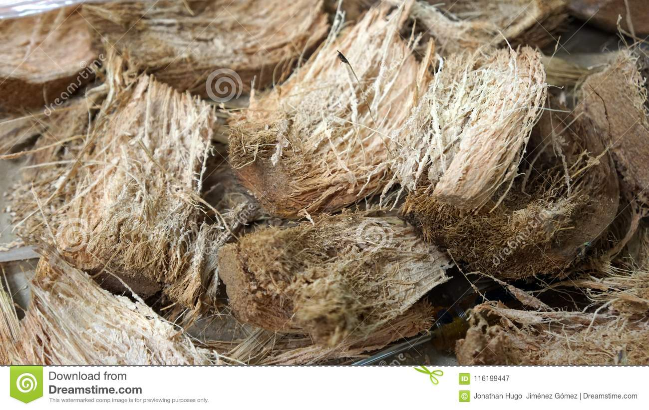 Coconut fibers texture