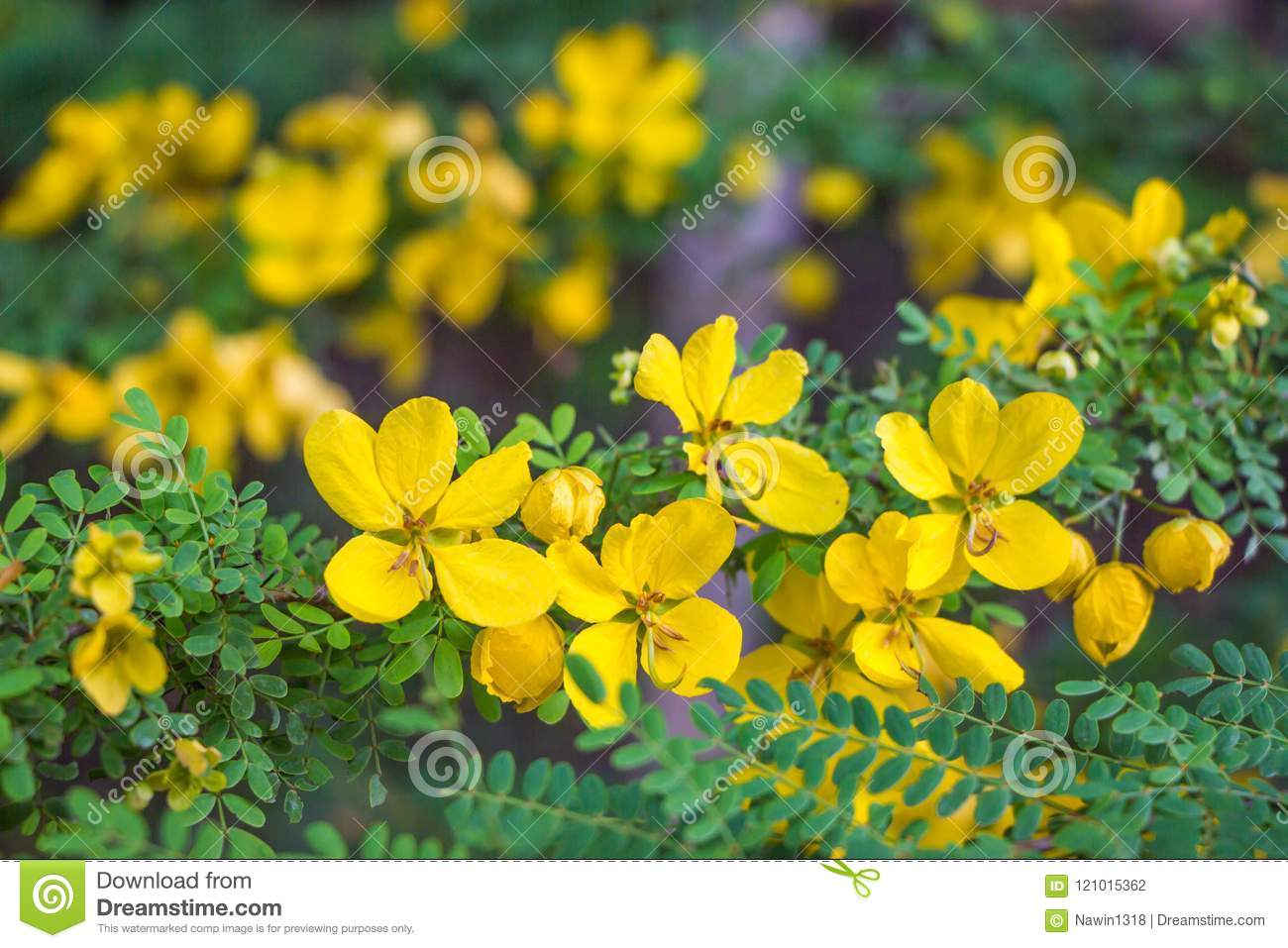 Bunch of cute yellow flowers stock photo image of little bunch of cute yellow flowers mightylinksfo