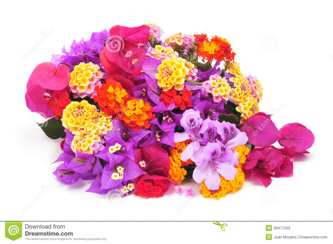 Bunch of different flowers stock image image of decorative 29477029 bunch of different flowers izmirmasajfo