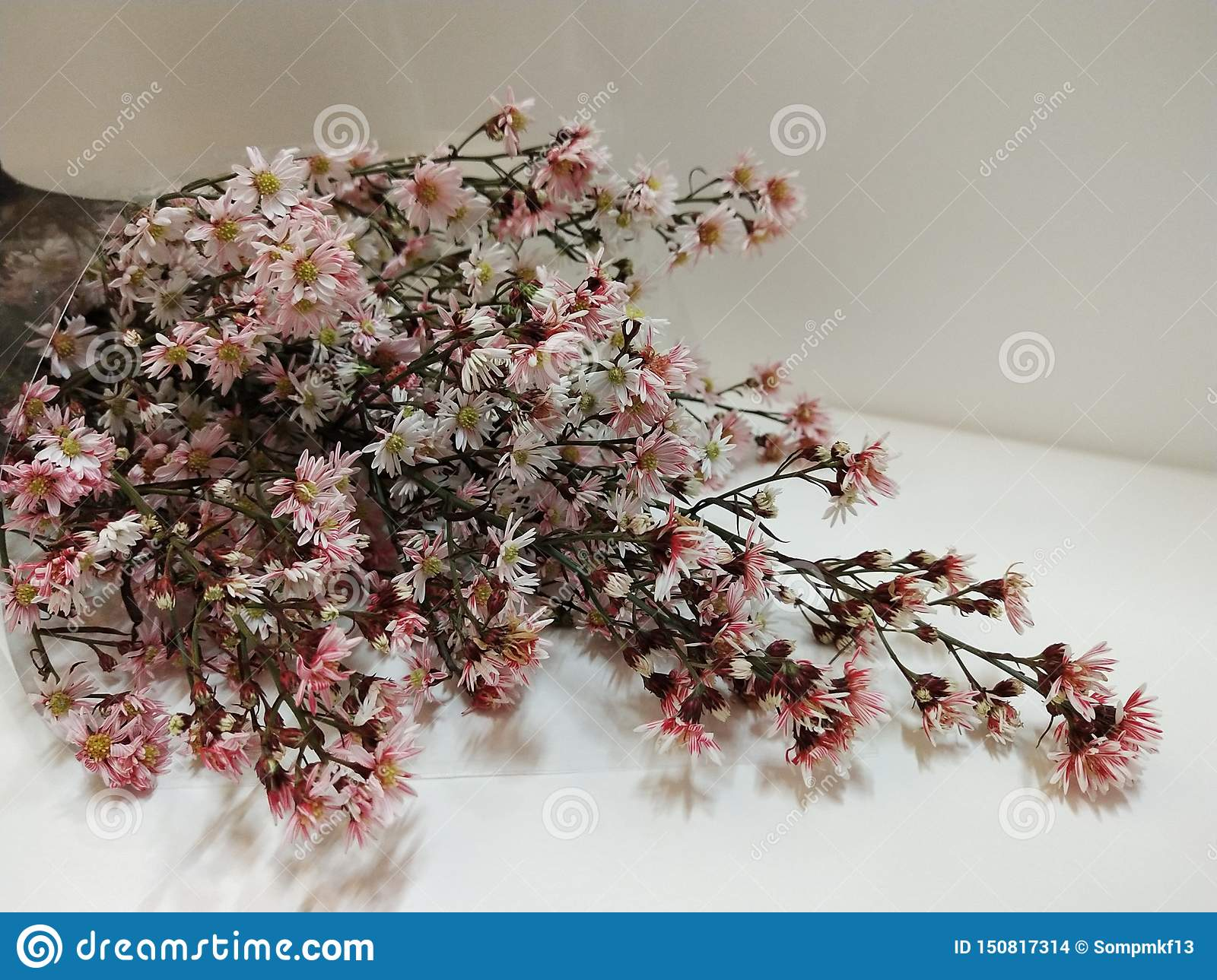 bunch of dried flowers on white background