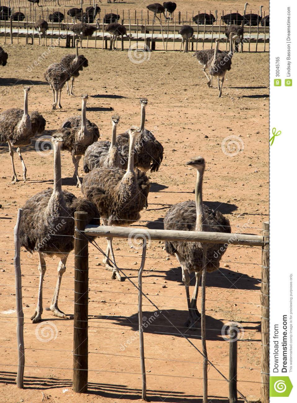Ostrich Farming Business Plan & Guidelines With Profitability