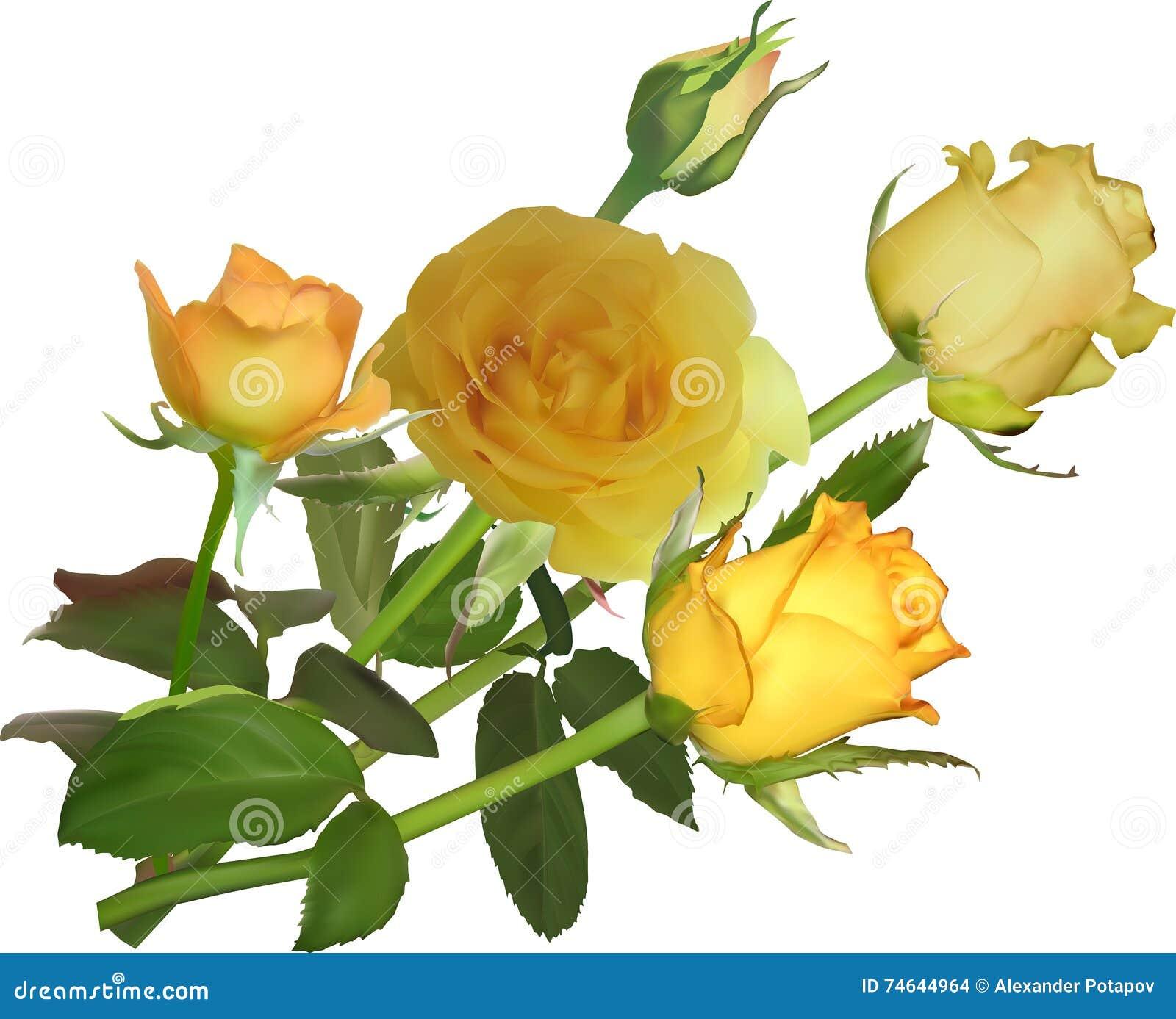 Bunch of five yellow rose flowers stock vector illustration of bunch of five yellow rose flowers mightylinksfo