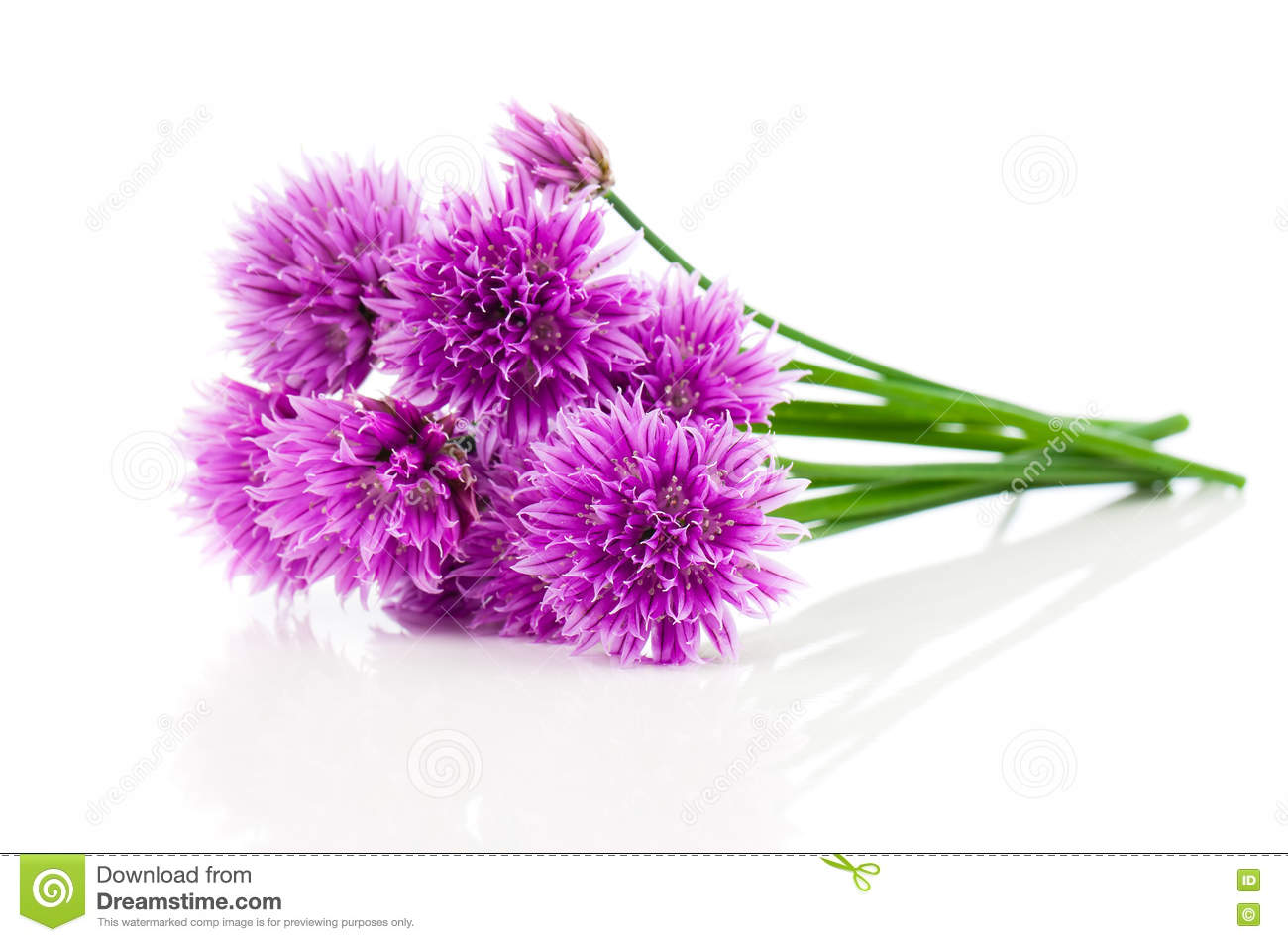 Bunch Flowering onions