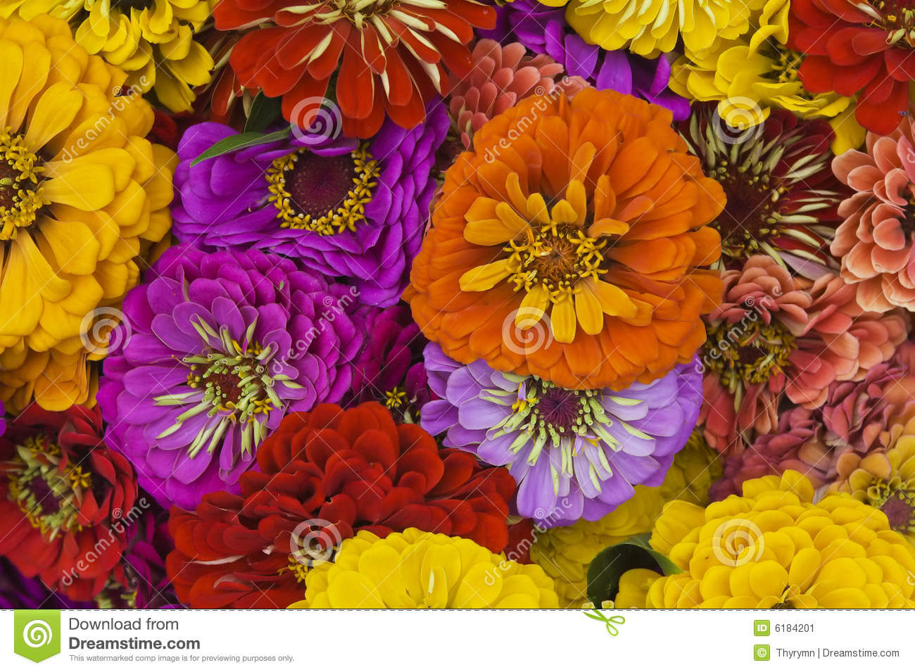Bunch of flowers in a bouquet close up stock image image of bunch of flowers in a bouquet close up izmirmasajfo