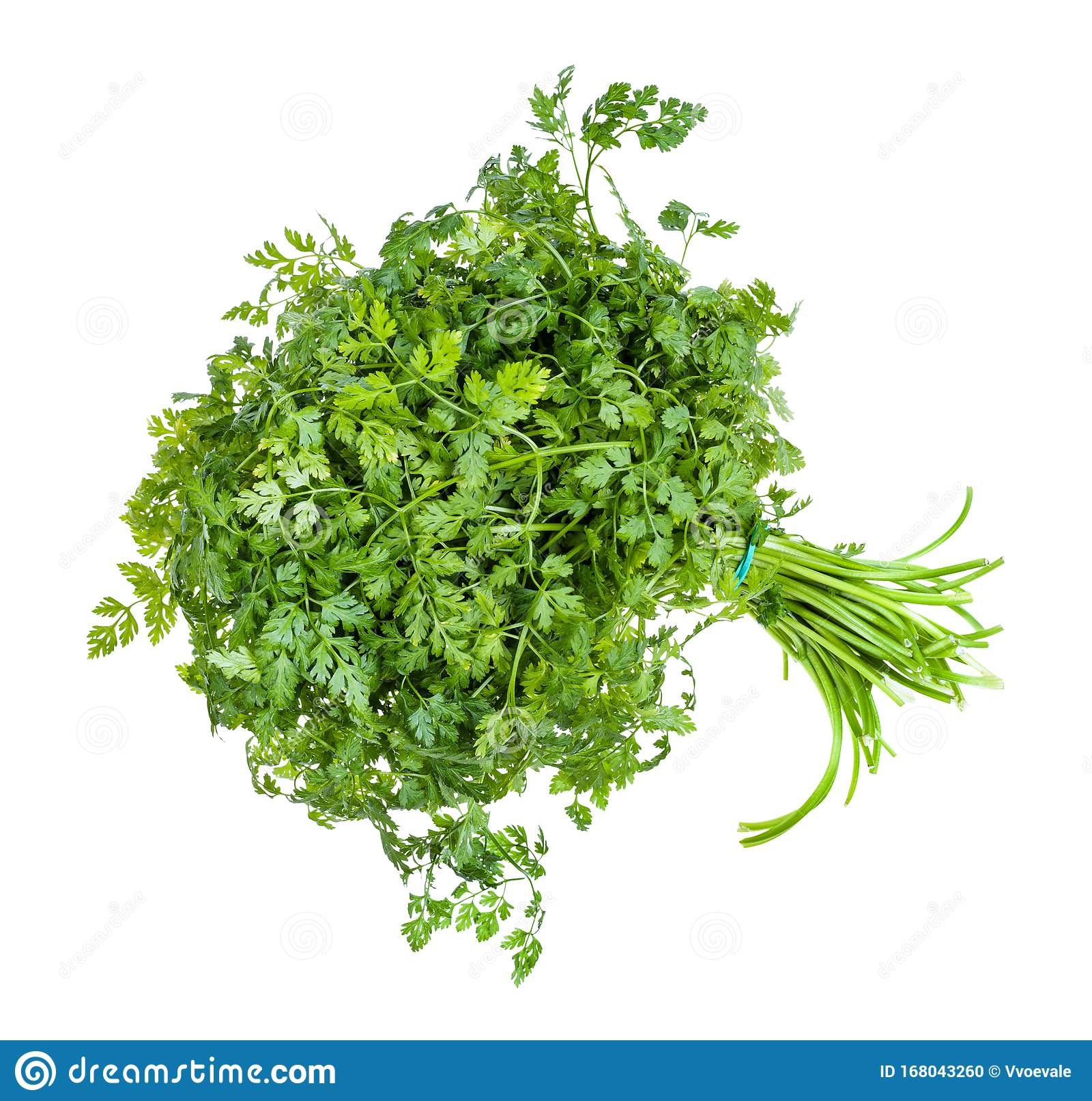 Bunch Of Fresh Chervil Herb Isolated On White Stock Photo Image