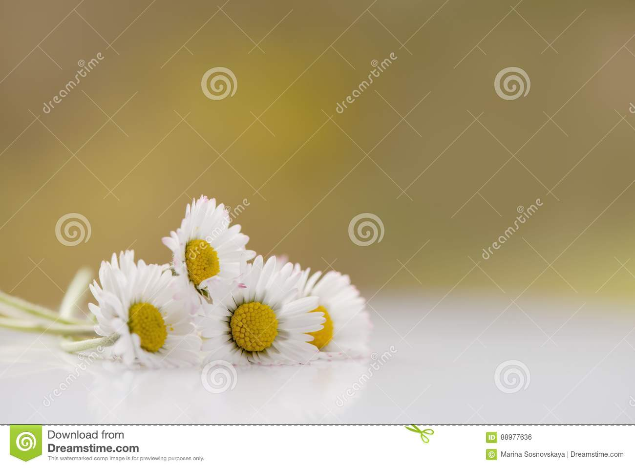 Bunch Of Fresh Daisy Flowers On A White Surface Stock Photo Image