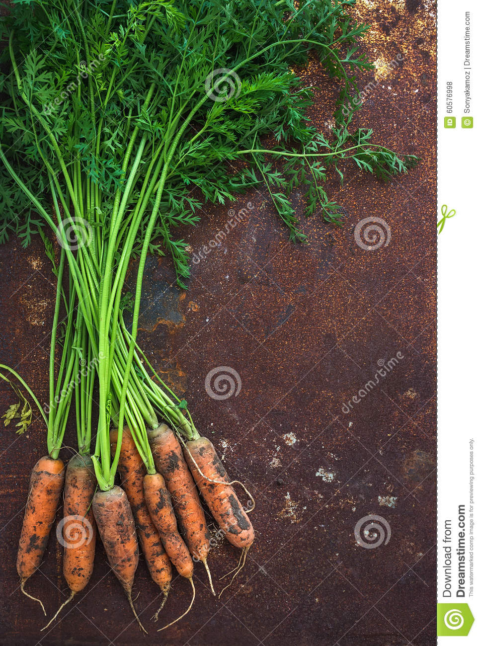 Bunch of fresh garden carrots over grunge rusty