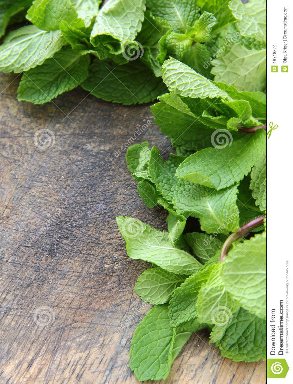 Bunch of fresh green mint stock photo image of garnish 18718374 for Olive garden cape girardeau missouri
