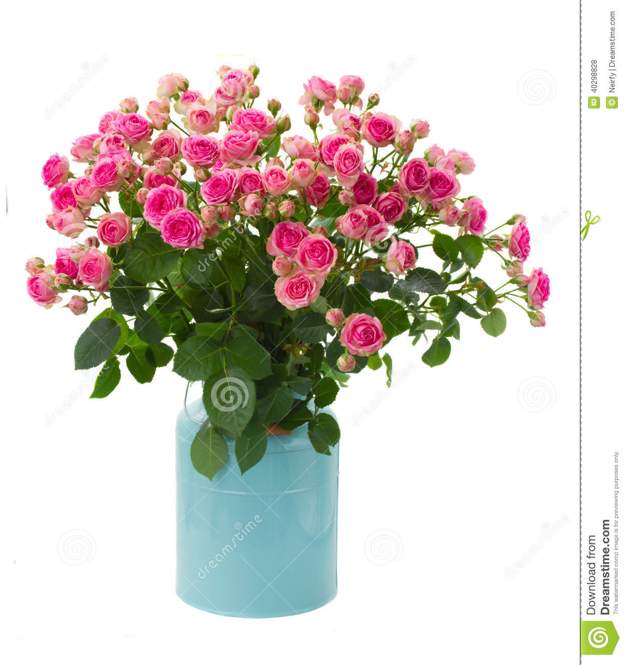 Bunch fresh pink roses in blue pot