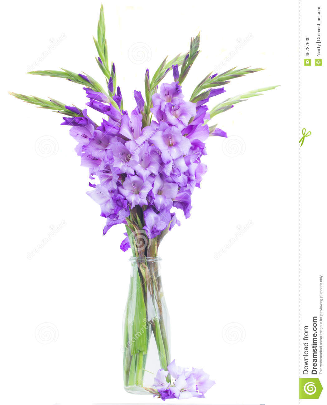 Bunch Of Gladiolus Flowers Stock Photo Image 45787539