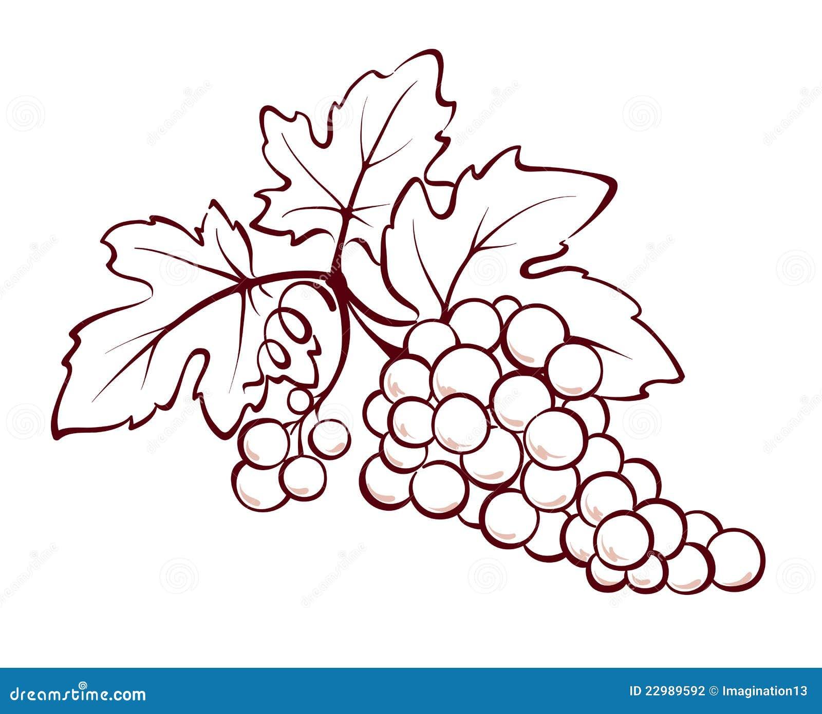 Illustration, decorative design element -- Bunch of grapes.