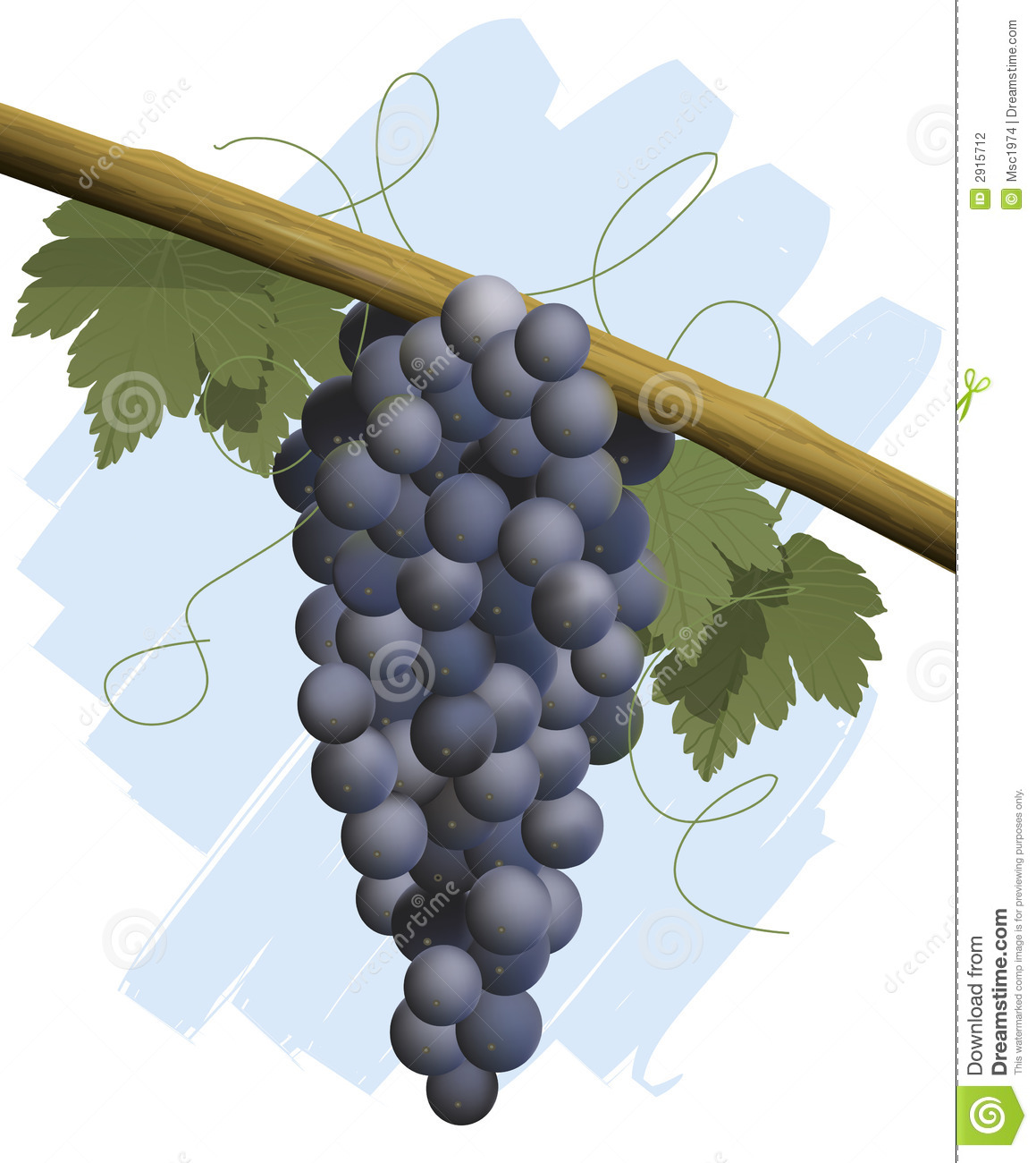 Bunch grapes red