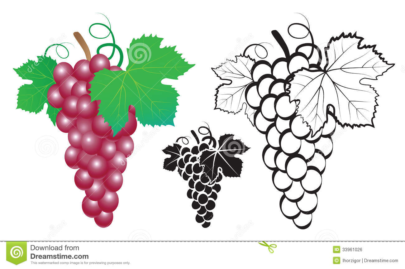 Bunch Of Grapes Stock Vector Illustration Of Silhouette 33961026