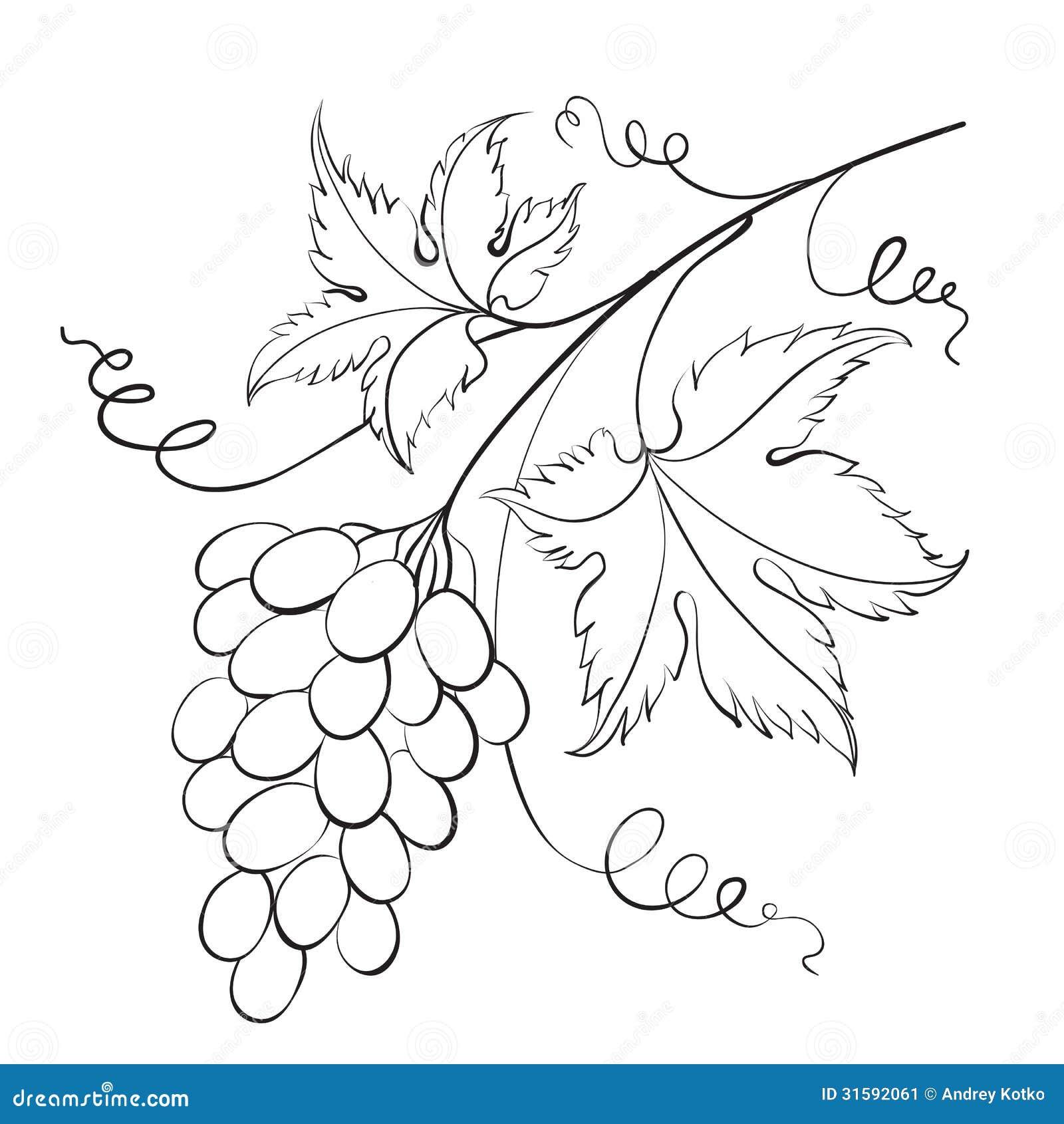 Grape Vine Branches Ornament Vector Stock Vector - Illustration ... for Drawing Grape Vines  131fsj