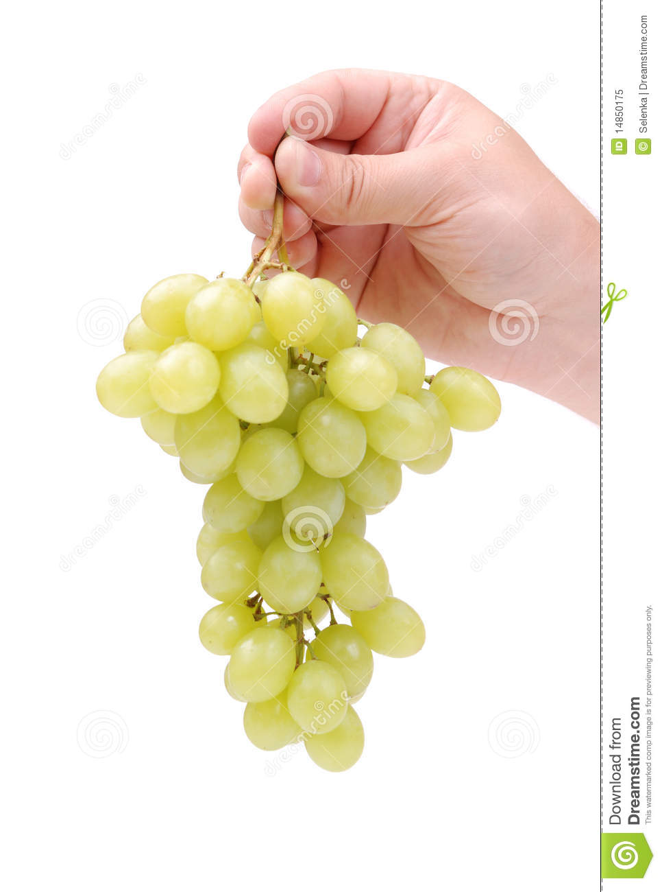 Bunch of a green grapes in hand