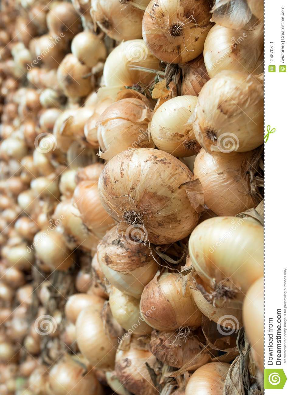 Bunch of hanging onions
