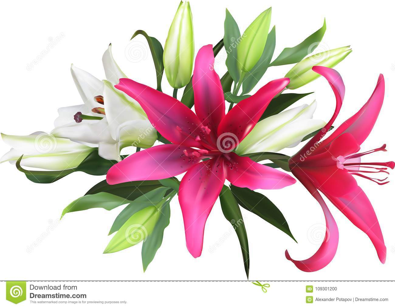 Bunch Of Isolated Red And White Lilies Stock Vector Illustration