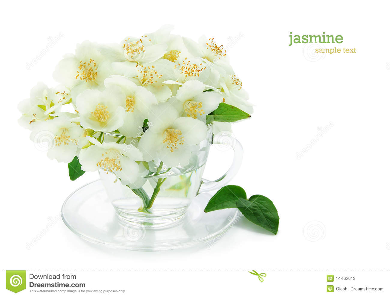 Bunch Of Jasmine Flowers Stock Image Image Of Floral