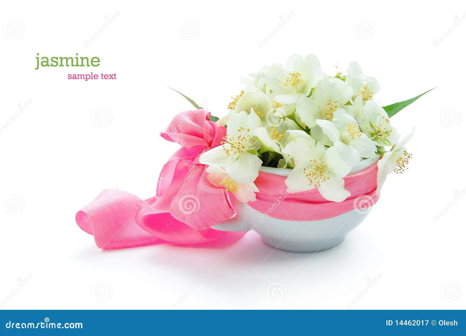Bunch Of Jasmine Flowers Stock Image Image Of Isolated 14462017