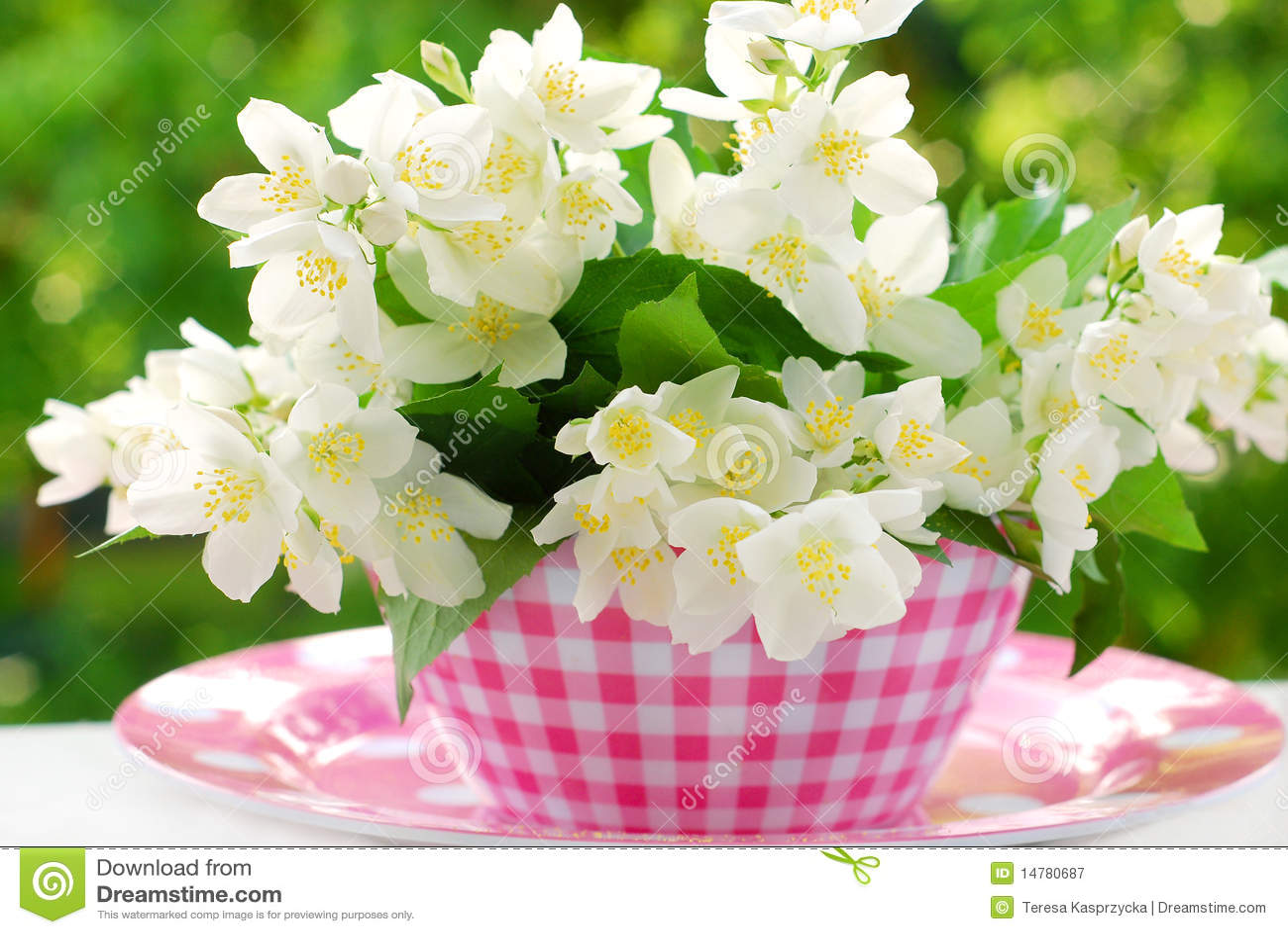 Bunch Of Jasmine Flowers Stock Image Image Of Spring 14780687