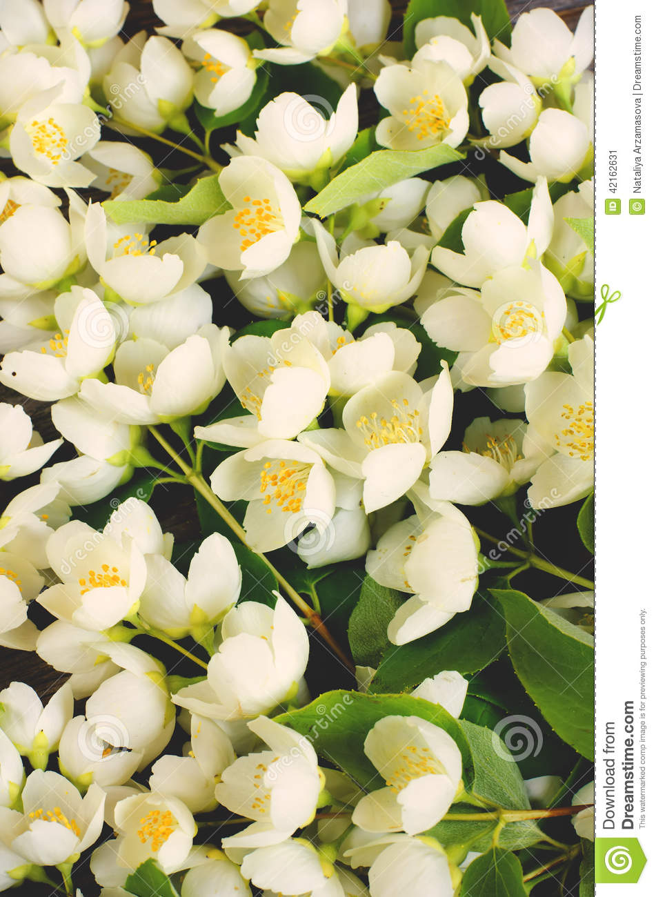 A Bunch Jasmine Flowers Stock Image Image Of Natural 42162631