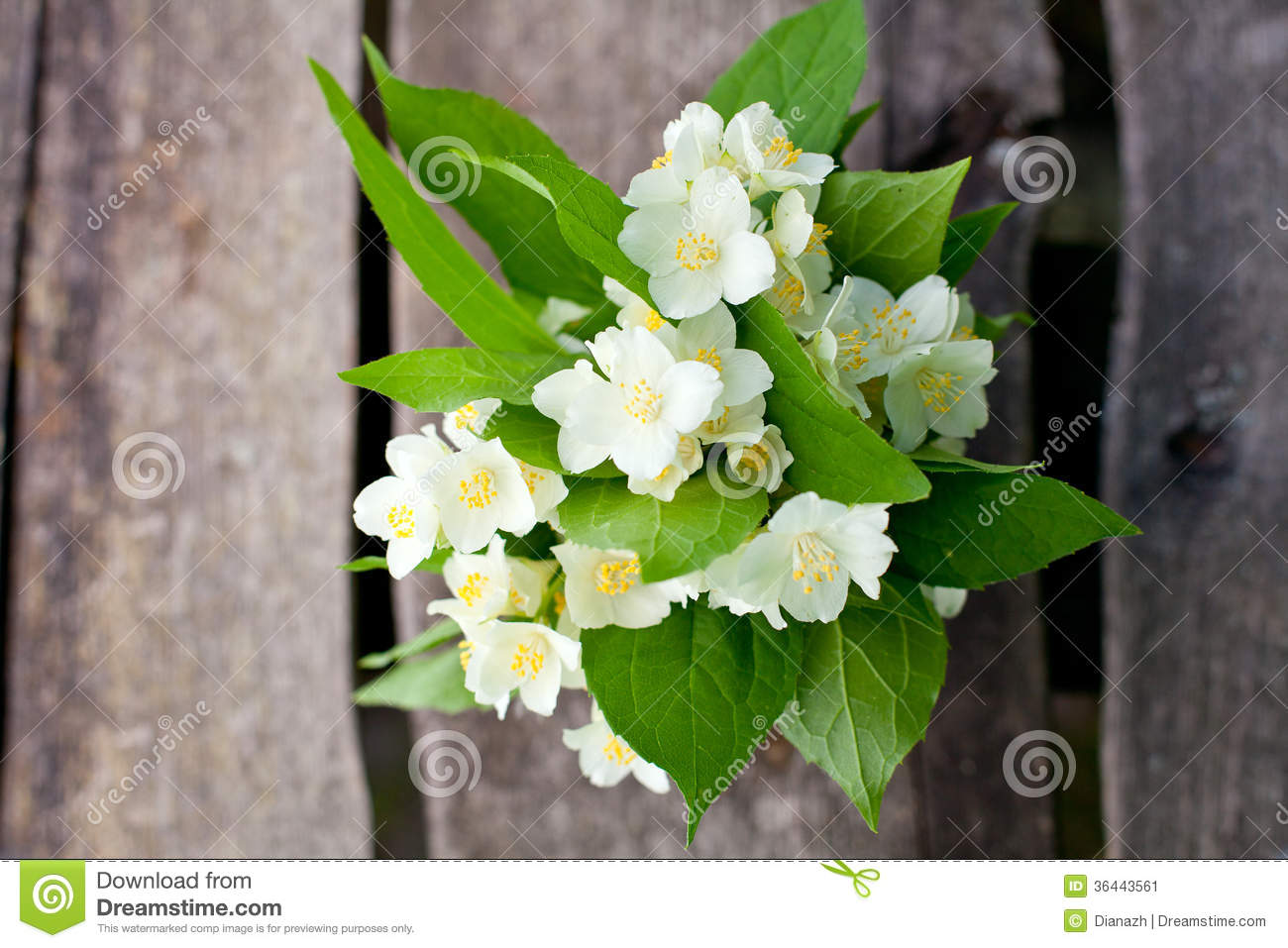 Bunch Of Jasmine Flowers On Wooden Table Stock Image Image Of