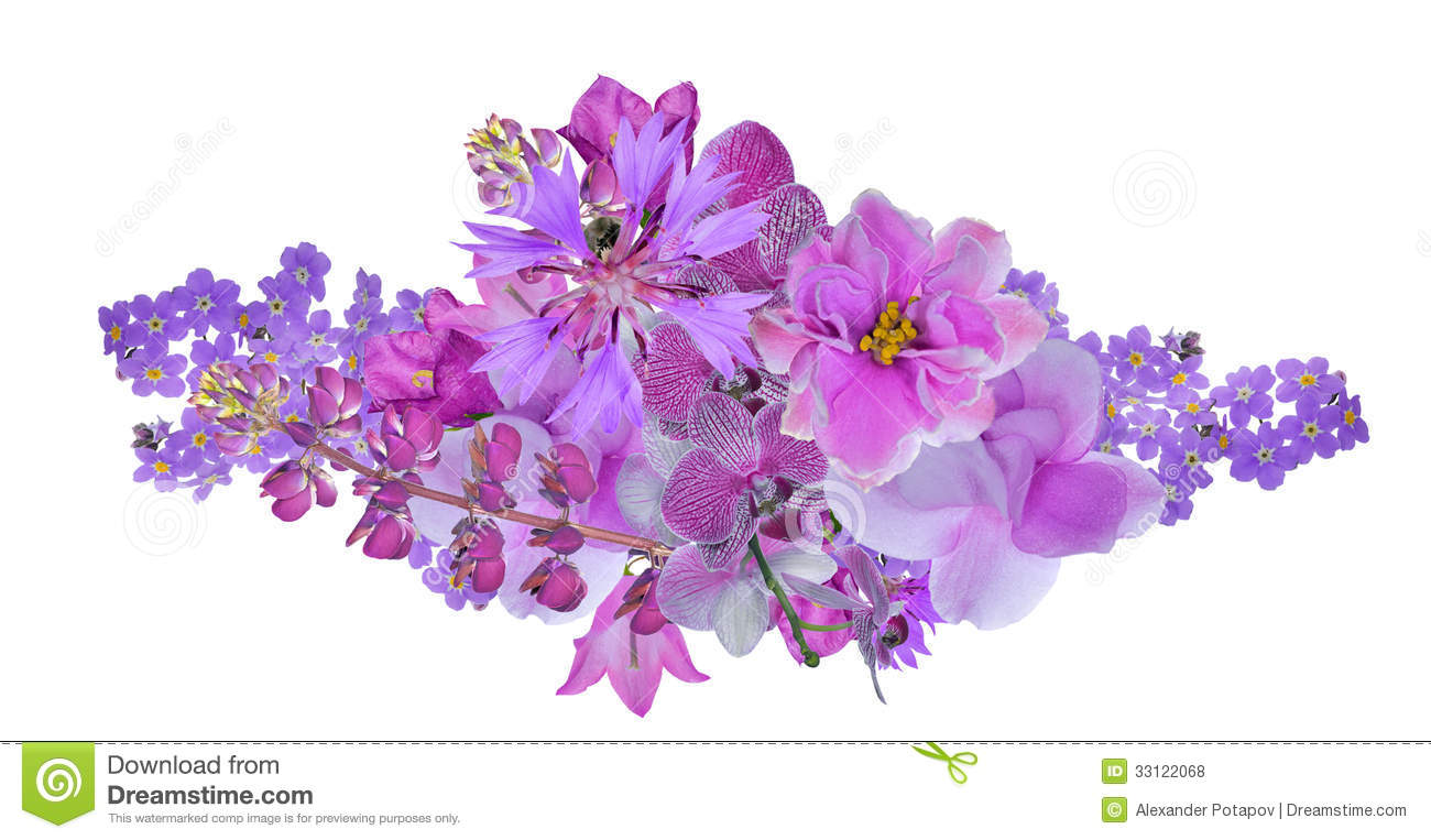 lilac flower finest find this pin and more on flowers by swifer