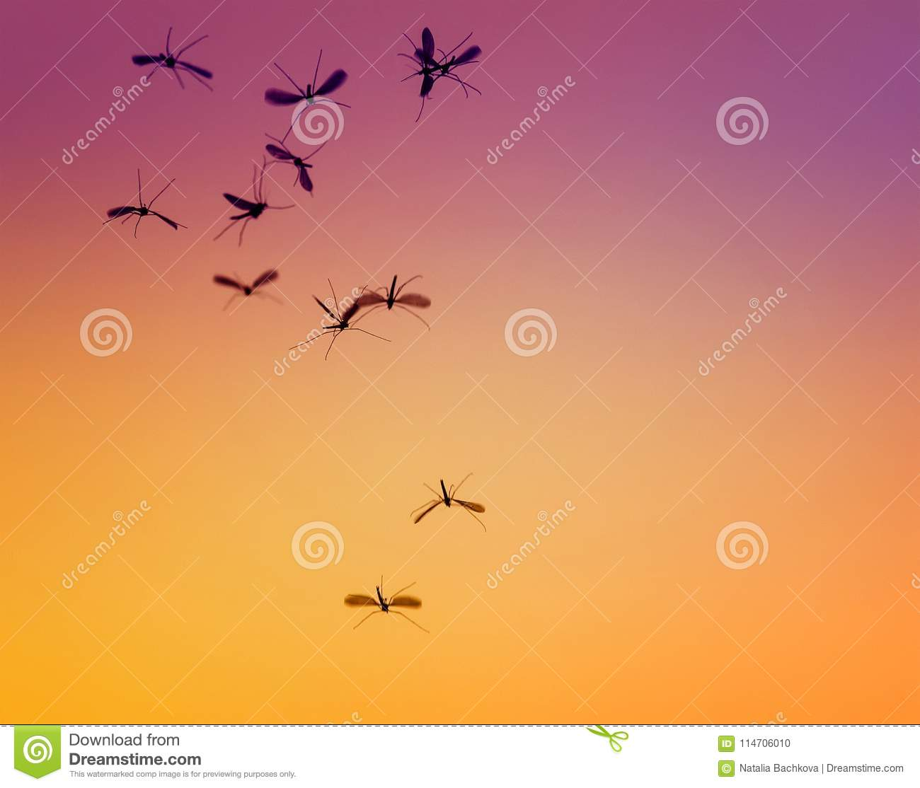 bunch of little dangerous insects mosquitoes flies against the