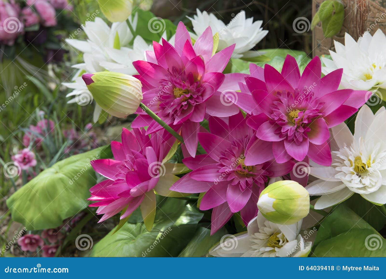 Bunch of lotus flower in the garden stock photo image of outdoor bunch of lotus flower in the garden izmirmasajfo Images