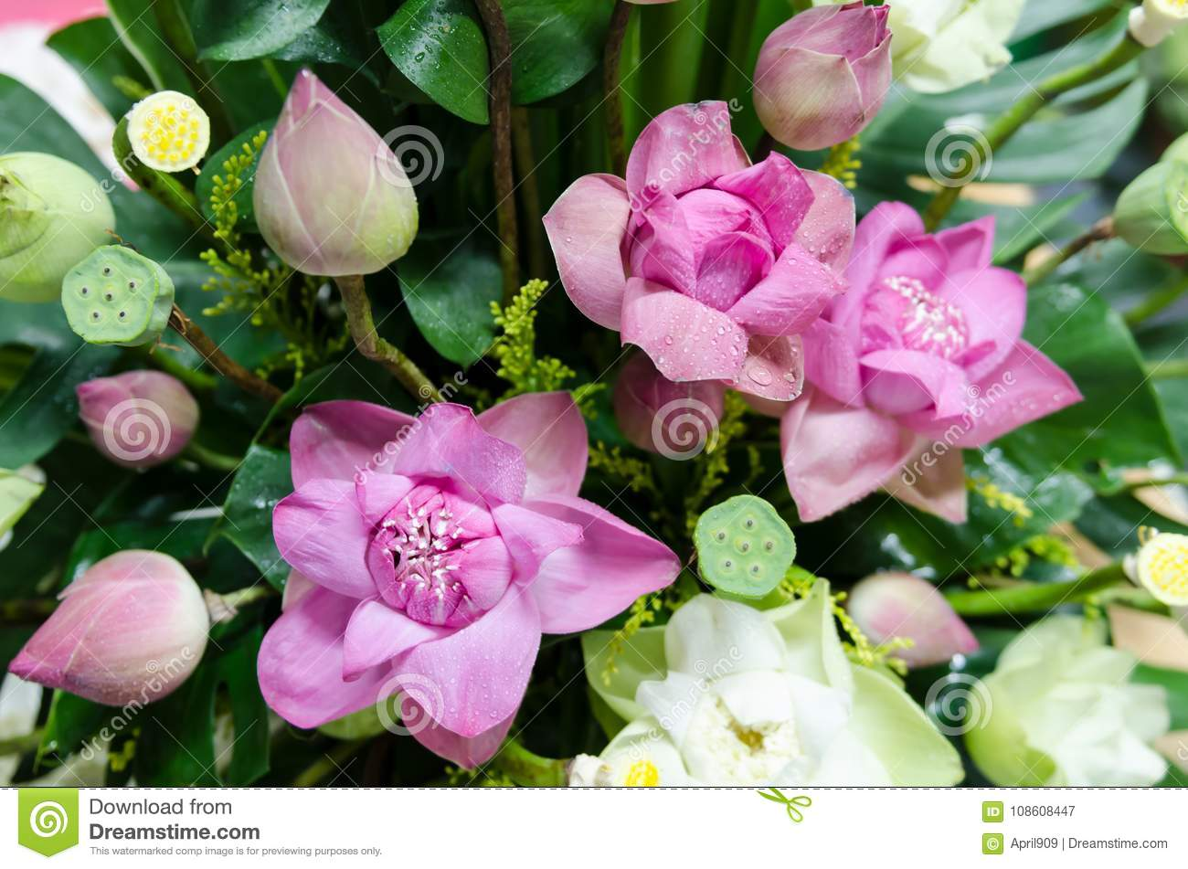 Bunch Lotus Flowers Stock Photos - Download 521 Images